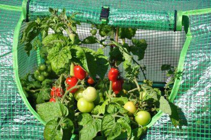 Foliekas Royal Well Cherry Tomato met tomatenplant