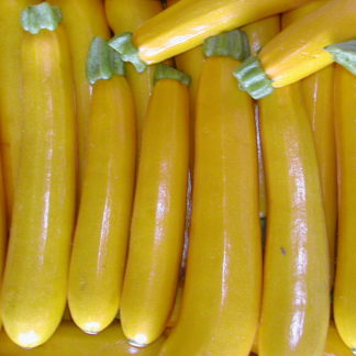 Courgette Gold Rush F1 geoogst