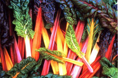Vers geoogste warmoes of snijbiet in vele verschillende kleuren