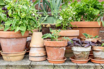 De Tuindoos Oase groenten in pot op terras of balkon