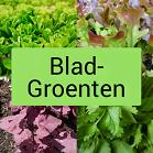 Icoon bladgroenten, sla, koriander, spinazie