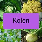 Icoontje kolen, wittekool, brocolli