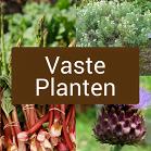 Icoontje vaste planten, rabarber, bergbonenkruid, artisjokken,
