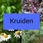 Icoontje kruiden, koriander, basilicum, bergbonenkruid