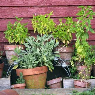 Kruidendoosje Fines Herbes