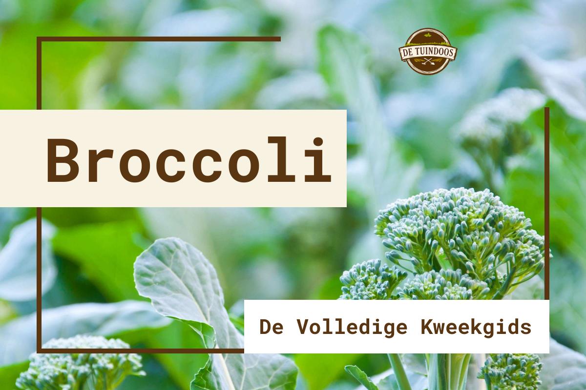 Omslag Kweekgids Broccoli