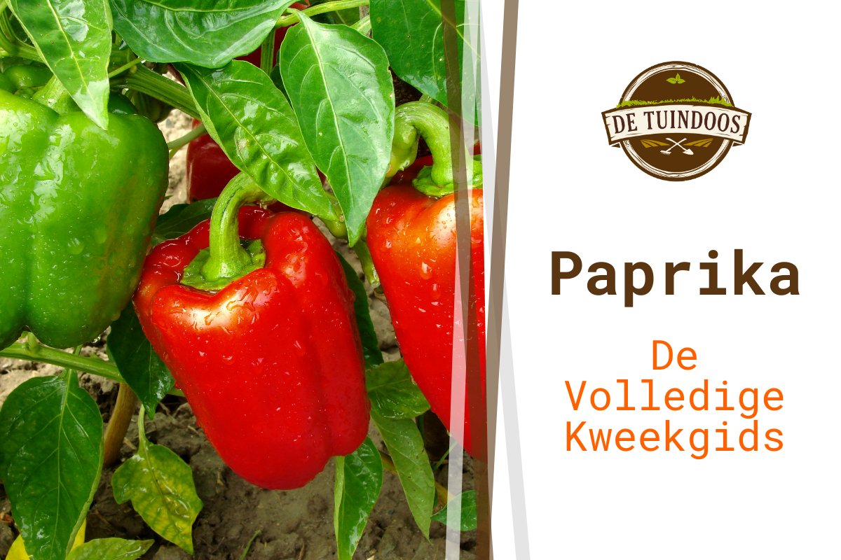 Paprika cover blogpost kweekgids