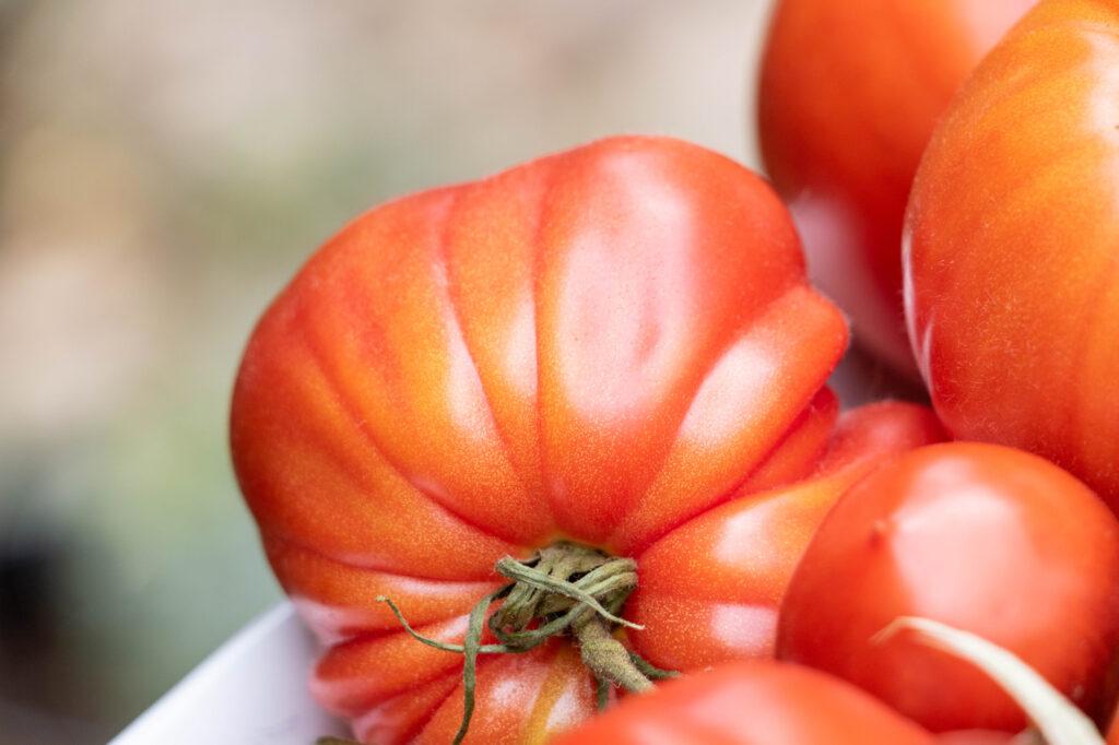 Coeur de boeuf tomaat